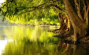 Tree by water 2